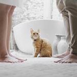Katze zwischen streitenden Eheleuten kurz vor der Scheidung